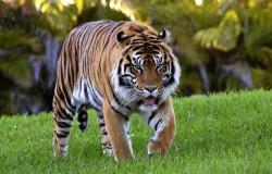 7 najniebezpieczniejszych zwierząt świata