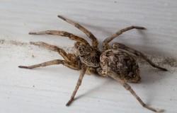 Czasem lepiej pająka wyrzucić za okno