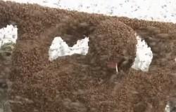 Szalony rekord Guinnessa. 109 kg pszczół obsiadło pszczelarza