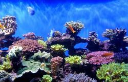 Wielka Rafa Koralowa nie będzie wpisana do Światowego Dziedzictwa UNESCO