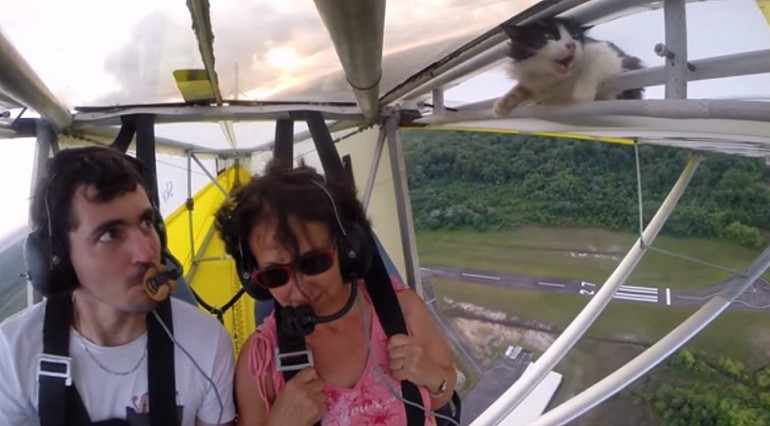 Niesamowita podróż i przygoda kota na paralotni