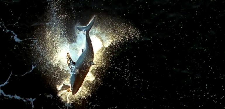 Atak rekina sfilmowany z góry - Fantastyczny widok