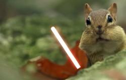 Wiewiórki Jedi i walka na laserowe miecze