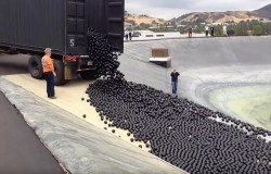 Miliony plastikowych piłek ma uchronić miasto Los Angeles