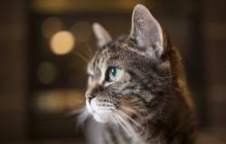 Dzień kota | 17 lutego obchodzony jest światowy dzień kota.