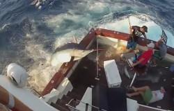 Wędkarstwo sportowe. Gigantyczny marlin wskoczył na łódź.