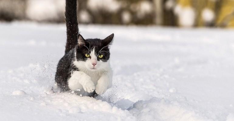 Mission: Impurrrsible - Kot bez zachamowań