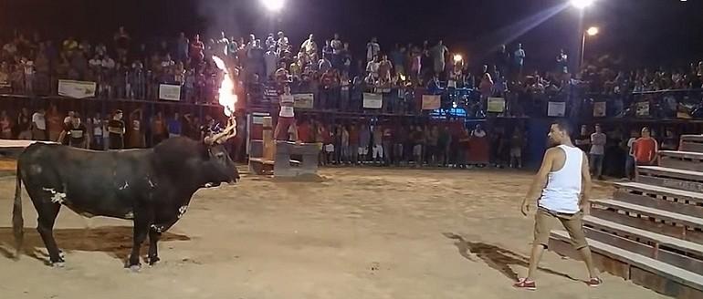 Nie lekceważ byka z ognistymi rogami.