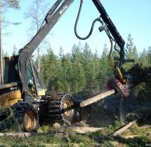 Niesamowita maszyna do wycinania lasu