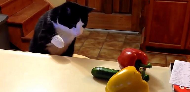 Dlaczego koty boją sie ogórków? Śmieszny film
