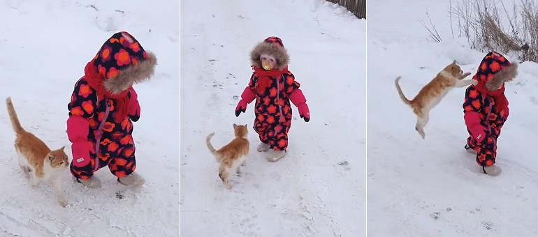 Zemsta wkurzonego kot za brak głaskania i ignorowanie