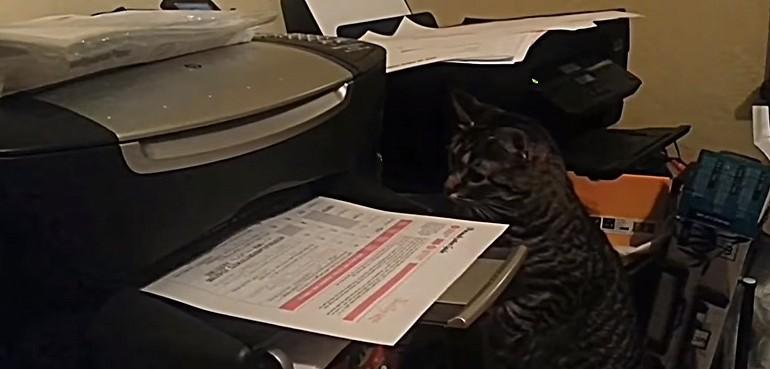 Kot i drukarka która zakłóca mu spokój