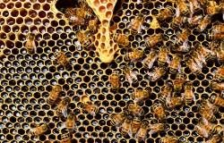 Olbrzymie wymieranie pszczół - w ciągu roku aż 44 procent.
