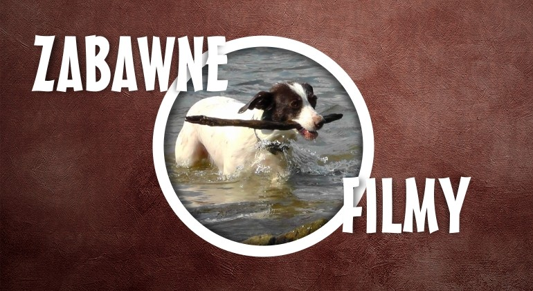 Pies albo telefon, zobacz jakie mogą być skutki. Śmieszny film.