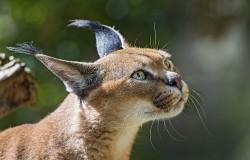 Jak kot spada na cztery łapy - slow motion