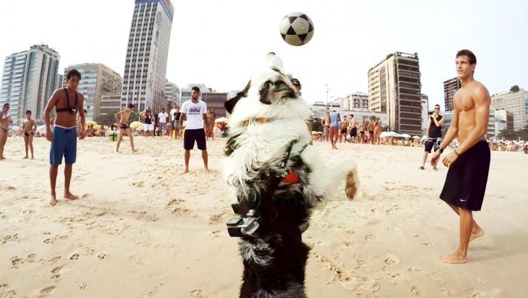Niesamowity pies grający w piłkę na plaży