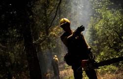 Precyzyjne ścinanie drzewa - tylko dla twardzieli