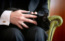 Co łączy faceta z kotem?