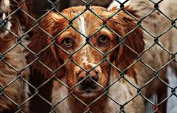 Możesz pomóc zwierzętom w schronisku. Odwiedź osobiście schronisko.