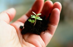 Ogrodnictwo, uprawa roślin, jako hobby