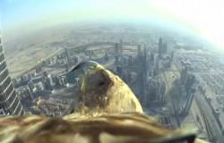 Dubaj z lotu ptaka – Orzeł wypuszczony z dachu Burj Khalifa